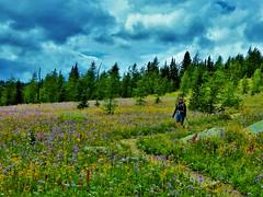 7-100 (Gnarlene) Tags: flower hiking banff healypass monarchramparts