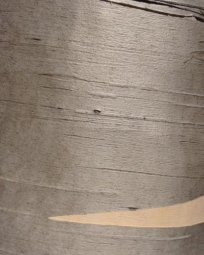 #automne #sansfiltre #arbre #argente #autumn #fall #nofilter #tree #silver #quebec #monttremblant