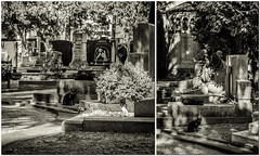 Monumentale 73 (-dow-) Tags: cats cemetery grave graveyard statue museum fuji milano statues riposo rest sculture museo gatti sculptures tombe cimitero cimiteromonumentale xe1 monumentalcemetery xf3514