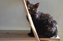 Micio Nero (.Vale.) Tags: cats baby animals cat kitten feline kitty kittens gatto gatti rifugio micio micia gattino gatta catshelter gattini micini