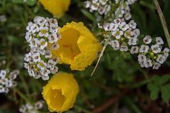 DSC_2154 (Fulvio De Gregorio) Tags: panorama pioggia selvatico zafferano fiumara ruggiada amendolea