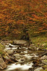 Le Valentin (Gourette) (Robeck Photography) Tags: autumn naturaleza nature rio ro forest river paisaje bosque otoo francia valentin seda beech haya larga pirineos gourette franceses exposicin