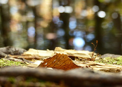 Bokeh Reflections (nikagnew) Tags: autumn orange brown reflection fall leaf woods novascotia bokeh edge dried forestfloor longlake