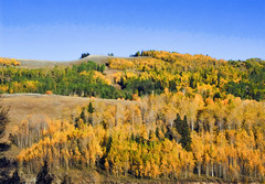 Fall Colors Come to Skyline Ridge, High Plateau, Central Utah, USA  2010 Patrick Alan Swigart, Gone to Look for America (Patrick Alan Swigart) Tags: usa fall colors look alan skyline america for utah high ut plateau pat central patrick gone ridge come 2010 swigart gonetolookforamerica