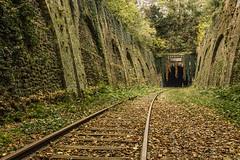 Petite Ceinture : Montouris (jean-nicolaslehec) Tags: autumn paris france fall railway railroads fallenleaves petiteceinture parcmontsouris