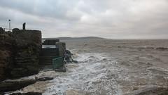 Pomarine Skua - it is - honsetly! (oldparson) Tags: sea waves wind weston seabird skua anchorhead pomarine