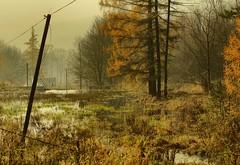 Lower pond in the Łopacinski valley (Zyla, K. alone) Tags: autumn nature landscape afternoon poland polska jesień beskidniski wysowa pentaxsmc thebp inexplore pentaxm5014 justpentax pentaxart pentaxk30
