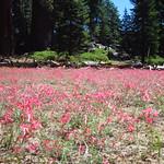 "Flowers Near McGurk Meadow <a style=""margin-left:10px; font-size:0.8em;"" href=""http://www.flickr.com/photos/14315427@N00/23570751235/"" target=""_blank"">@flickr</a>"