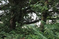 IMG_9318 (mconnor258) Tags: trees nature animal squirel wildanimals naturephotography naturelandscape