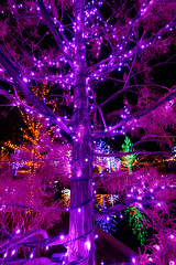 Purple glow (pixl8) Tags: christmaslights vitruvianlights