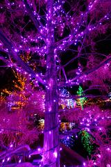 Purple glow (pixl8) Tags: christmaslights vitruvianlights