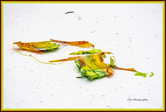 And They Walked Away (TAC.Photography) Tags: sledding snowsledding snow brokensled plasticsled colorfulsledding baycity sleddingslopes humorus whimsical funny