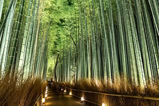 竹林の道 - 嵐山花灯路 / Arashiyama Hanatouro Festival