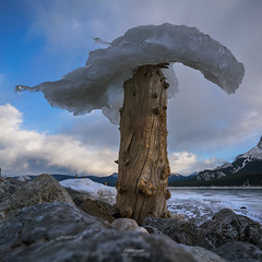 'Iceshroom Forest' - Abraham Lake, Alberta (Gavin Hardcastle - Fototripper) Tags: abraham lake alberta winter snow ice cold freezing frozen beach rocks gavinhardcastle fototripper