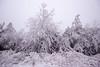 white is the new green (Jules Marco) Tags: white weis schnee snow baum tree natur nature outdoor österreich austria niederösterreich loweraustria woodquarter waldviertel canon eos600d sigma1020mmf35exdchsm wideanglelens weitwinkel cold kalt winter