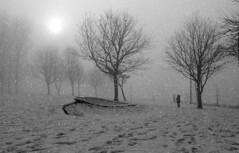 Fairytale in manchester (plot19) Tags: plot19 photography people british britain blackandwhite blackwhite black landscape light love winter snow xmas children manchester england english nikon north northwest northern now