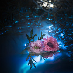 Of Moonlight Mates (Charles Opper) Tags: canon newzealandtearose spanishmoss blue color cool dark dreamy flowers light macro mood moonlight mysterious nature reflection surreal water square