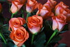 DSC_4239 Bouquet of Roses (PeaTJay) Tags: nikond750 reading lowerearley berkshire macro micro closeups gardens indoors nature flora fauna plants flowers bouquetofroses rose roses rosebuds