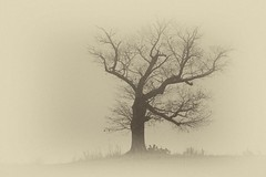 Lonely oak - Anderson Co, S.C. (DT's Photo Site - Anderson S.C.) Tags: canon 6d 24105mml lens oak tree andersonsc rural country road rustic black white foggy early morning ghostly eerie hill bw art artistic