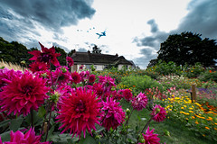 English Garden (Daveography.ca) Tags: england thecotswolds gb greatbritain bampton home rural town garden unitedkingdom cotswold britain oxfordshire cottage house englishgarden flowers cotswolds flower village uk thatchroof