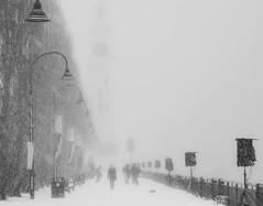 elle vient vers moi (photosgabrielle) Tags: photosgabrielle montréal monochrome bwphotography winter neige snow hiver noirblanc oldmontreal vieuxmontréal
