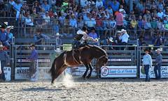 P3110206 (David W. Burrows) Tags: cowboys cowgirls horses cattle bullriding saddlebronc cowboy boots ranch florida ranching children girls boys hats clown bullfighters bullfighting