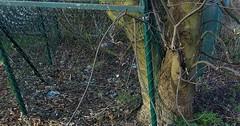 """Der Zaun. Die Zäune. Hier sieht man einen Baum, der um einen Zaun herum wächst. • <a style=""""font-size:0.8em;"""" href=""""http://www.flickr.com/photos/42554185@N00/32715278284/"""" target=""""_blank"""">View on Flickr</a>"""