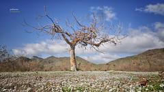 (098/17) El árbol (Pablo Arias) Tags: pabloarias photoshop nxd cielo nubes españa árbol flores montañas parque calblanque lamanga murcia comunidadmurciana