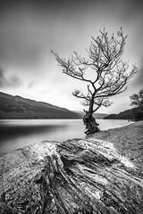 Resistance (rgcxyz35) Tags: trees lochs nationalpark water scotland lochlomond rocks longexposure lomondtrossachs clouds