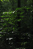 bright leaves (Molly Des Jardin) Tags: park trees light shadow usa sun green leaves forest state bright pennsylvania branches sunny 2014 susquehannock drumore 43215mm