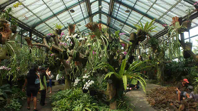 The Orchid House and Orchidarium