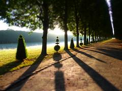 manicured dawn (Chantal van der Ende-Appel) Tags: france versailles iledefrance grandcanal