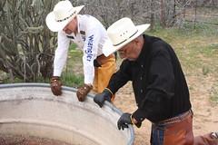 COWBOY PHOTO SHOOT (AZ CHAPS) Tags: ranch arizona leather spurs cowboy boots hats wranglers gloves chaps corral logoshirt bibshirt
