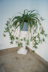 (Ilona Falk) Tags: grandma white plant film analog corner 35mm ancient pillar grain olympus flashlight deco olympusmju