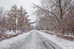 HE0G8915-01 (Бесплатный фотобанк) Tags: зима ледянойдождь лесопарк обледенение парк россия москва