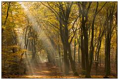 Light Beams  -  Zonneharpen in het Speulderbos ... (Martha de Jong-Lantink) Tags: light sunlight herfst rays lightbeams herfstkleuren drie 2015 zonnestralen speulderbos zonneharpen judithborremans herfstworkshopjudithborremans