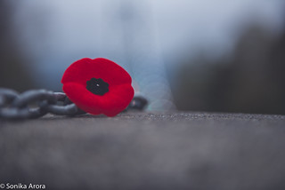 Thank you to all of the men and women who fought, and still fight, to protect our freedom. #RemembranceDay