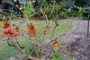 P1020762 (katredmond) Tags: sydney botanicalgardens sydneybotanicalgardens royalbotanicalgardens