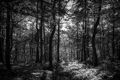 automne (cinqnord) Tags: blackandwhite monochrome noiretblanc entredeuxmers
