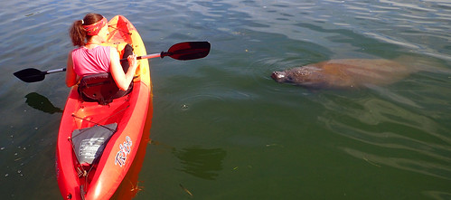 Kayak Tour  with manatee Sarasota