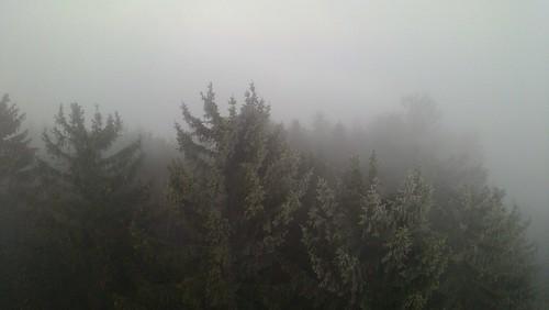 Hutwisch im Nebel 3