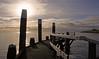 Harbor @ Texel.  #meeuw #Texel #wadden #bird #birds #oudeschild #waddenzee #wadden #eiland #island #dutch #holland #netherlands #europa #haven #harbor #harbour #leg #one #nature #animal #sea #zee #seascpae #sun #zon #Texelpics #oudeschild (JustinSinner.nl) Tags: sea sun haven holland bird nature netherlands dutch birds animal waddenzee island one harbor wadden europa harbour leg zee zon meeuw texel eiland oudeschild seascpae wadfoto texelpics