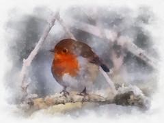 Christmas (alanpeacock2) Tags: christmas card seasonsgreetings robin watercolour winter merrychristmas painting birds cockrobin snow