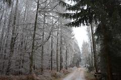 DSC_5718 Frostig und schön... - Frosty and beautiful ... (baerli08ww) Tags: deutschland germany rheinlandpfalz rhinelandpalatinate westerwald westerforest wald forest winter frost frozen raureif hoarfrost