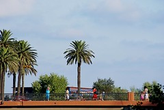 palme e passerella (acqua di mare) Tags: palme passerella street ventimiglia liguria