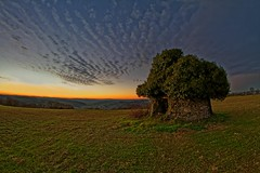 Hobbit lands in Quercy - Terres Hobbit en Quercy (Sébastien Vermande) Tags: canon7d france midipyrénées lot winter hiver coucherdesoleil sunset paysage landscape campagne countryside champ pierres stones lierre ivy nuages clouds samyang8mm fisheye vermande