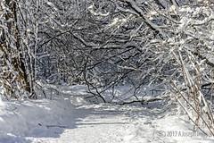 Snow Trails (A.Joseph Images) Tags: winter snow snowtrails d7200 nikkor70200f28 landscape hiver