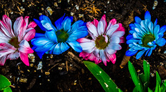 Omygod tom. (Omygodtom) Tags: contrast composition colorful color blue bokeh green white red shadow shade outdoors flower flickr senery setting scene scenic nikon nature natural d7100 perspective tamron90mm tamron digital detail