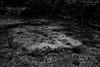 Untitled... (l1ze) Tags: 35mm blackwhite blackandwhite dk danmark denmark leica leicam leicam9p monocrome odsherred sanddobberne sjælland winter zealand blackandwhitephoto blackandwhitephotos bw l1ze lennartjoern