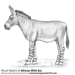 African Wild Ass with Pencils (drawingtutorials101.com) Tags: african wild ass donkey equus africanus donkeys animals sketch sketching sketches pencil draw drawing drawings how